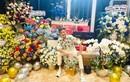 Đàm Vĩnh Hưng khoe biệt thự ngập hoa, quà trong ngày sinh nhật