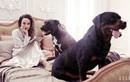 Angelina Jolie 44 tuổi đẹp rạng ngời với thần thái mê hoặc