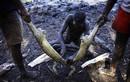 Một ngày đi săn cá sấu làm thịt của các thổ dân