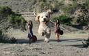 Hình ảnh kinh ngạc khi loài chó khổng lồ hơn con người