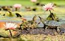 Chết mê những chú rùa đáng yêu nhất thế giới