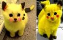 Chết mê những con Pikachu mèo cực đáng yêu