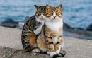 """Cặp mèo lang thang khiến con người """"ghen"""" vì quá hạnh phúc"""