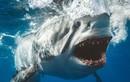 Lạnh gáy nhìn thẳng vào hàm cá mập đầy chết chóc