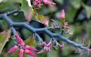 Trị mụn nhọt, mẩn ngứa với loài cây có rất nhiều ở VN