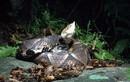 Cận mặt các loài rắn cực độc ở Việt Nam, nhìn thấy nhanh tránh xa