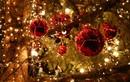 Cảnh giác nguy cơ nhiễm độc từ đồ chơi, đồ trang trí Noel