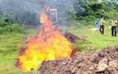Quảng Ninh: Tiêu hủy hơn 1.000 con chim và 300 kg gà thịt nhập lậu