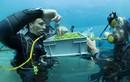 Video: Công nghệ trồng rau dưới đáy biển làm salad