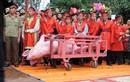 Kiến nghị đổi tên lễ hội Chém lợn thành Rước lợn