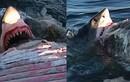 Kinh dị ngồi xác cá voi chụp ảnh hàm cá mập