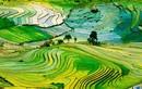 Ruộng bậc thang Việt Nam lọt top cảnh quan đẹp nhất thế giới