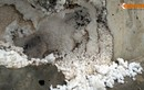 Sở GTVT nói gì về nghi vấn cầu bê tông cốt xốp ở Hà Nội?