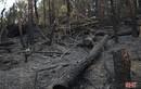 """Đau thương cảnh hoang tàn của rừng ở Hà Tĩnh sau """"biển lửa"""""""