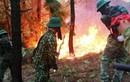 Cháy rừng thông trên núi Hồng Lĩnh: Bắt nghi can làm cháy rừng