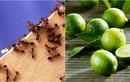 Nhà sạch không còn một con kiến nhờ loại quả dễ mua dễ tìm này