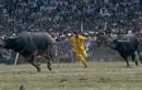 Những lễ hội đâm, chọi trâu gây tranh cãi ở Việt Nam