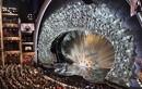 Choáng ngợp sân khấu đính 45 triệu viên pha lê để trao giải Oscar
