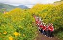 Những điểm ngắm hoa dã quỳ đẹp khắp cả nước