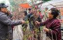 Ảnh: Người dân Hà Nội tranh thủ dạo phố, xin chữ trước thềm năm mới