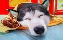 Bị cướp cầm súng xông vào tiệm vàng, chó cưng vẫn ngủ ngon lành