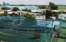 Ảnh: Sân golf, sân bóng, nhà hàng bủa vây Tân Sơn Nhất