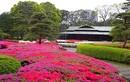 Ngắm khu vườn xanh mướt trong cung điện Hoàng gia Nhật Bản