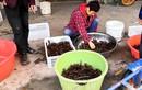 """""""Đột nhập"""" thủ phủ nuôi tôm hùm đất ở Trung Quốc"""