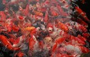 Đại gia Thái Nguyên lấy đá quý làm hồ cá: Thú chơi bạc tỷ của nhà giàu Việt