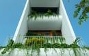 Ngôi nhà có 8 vườn bậc thang độc đáo giữa phố thị