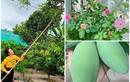 Khu vườn ngập sắc hoa, cây ăn trái trong biệt thự của Vy Oanh