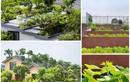 Mướt mắt những ngôi nhà có vườn trên mái đẹp nhất VN