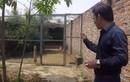 Nhà vườn hơn 1.000 m2 trồng cây, nuôi gà của nghệ sĩ Quang Tèo
