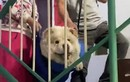Video: Cặp vợ chồng già khiêng chú chó lên xuống cầu thang mỗi ngày