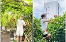 Bất ngờ khu vườn ngập rau trái trong biệt thự của Đàm Vĩnh Hưng