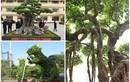 Chiêm ngưỡng loạt cây cảnh độc đáo của Việt Nam lên báo ngoại