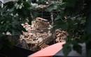 Báo cáo nhanh về vụ sập nhà cổ Trần Hưng Đạo, Hà Nội