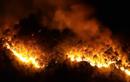 """Cháy rừng lịch sử tại Hà Tĩnh: Những hình """"nhói lòng"""""""