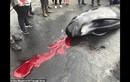 Cá voi mẹ mang thai bị xẻ thịt: Điều kinh khủng hơn