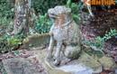 Độc đáo những phong tục tập quán gắn với con chó ở Việt Nam