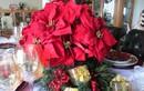 Giai thoại Giáng sinh ít người biết về cây hoa trạng nguyên