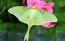 Đã mắt những loài bướm quyến rũ nhất thế giới