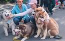 Lễ hội cún cưng 2019 tại Sài Gòn quy tụ hàng trăm chú chó đẹp