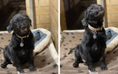 Video: Tan chảy trước chú chó cười toe mỗi lần có người đến nhận nuôi
