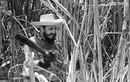 Bồi hồi nhớ kỷ niệm chặt mía cùng lãnh tụ Fidel Castro