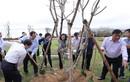110.000 cây xanh được Vinamilk danh tặng cho người dân tỉnh Bình Định