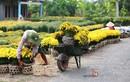 Những điểm ngắm hoa Tết đẹp nhất miền Nam