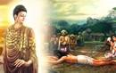 Phật dạy 7 trường hợp tuyệt đối không sát sinh kẻo họa bất trùng lai