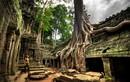 Độc đáo những loài cây có hình thù kỳ lạ nhất thế giới