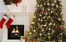 Cây thông Noel đầu tiên trên thế giới không phải là... loại cây